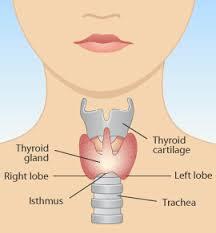 Natural Family Health Care Doctor Keppel Blog: Thyroid Glands explained